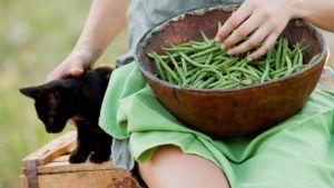 alimentos sustitutos carne vegana