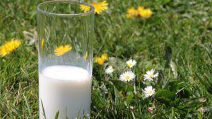 preparar leche de alpiste