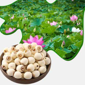 semillas de loto veganos