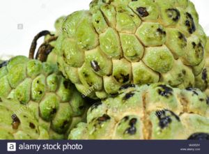 bifrutas tropical