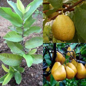 comprar frutas tropicales