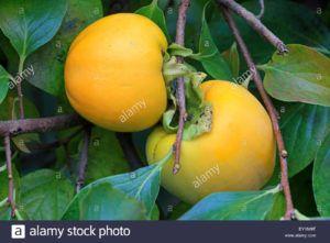 fruta kakis
