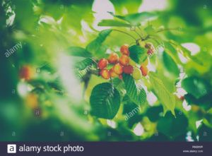 frutas de temporada de verano