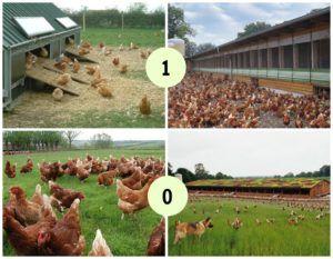 huevos de gallinas camperas vegano