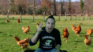 huevos gallinas vegano