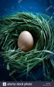 incubar huevos de codorniz vegano