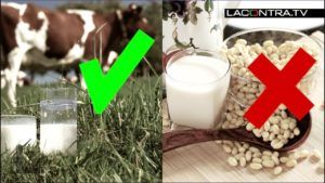 leche de soja dia vegana