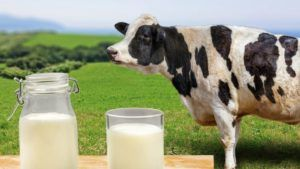 leche de vaca para niños vegana