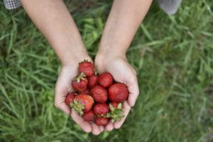 mermelada de fresas sin azúcar vegana