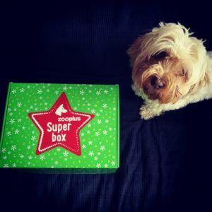 snacks perros pack navidad