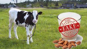 sustituir la leche