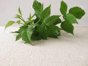 té hojas de frambuesa