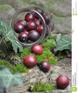 zumo de arandanos rojos