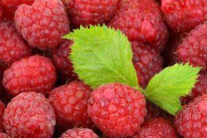 zumo frutos rojos